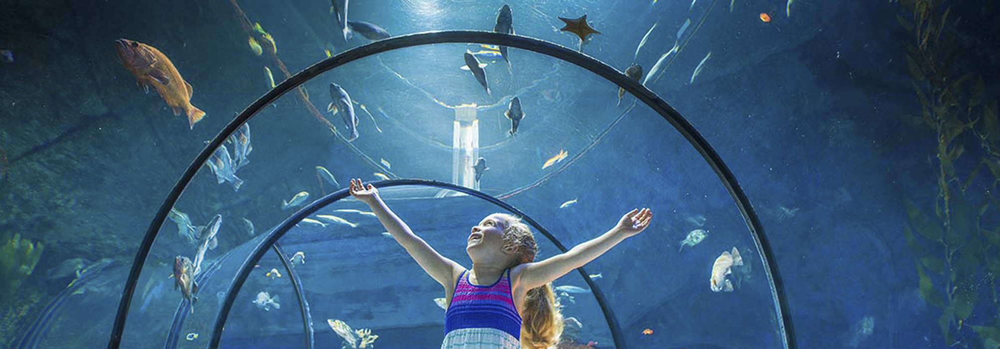 Introduction to Public Aquariums