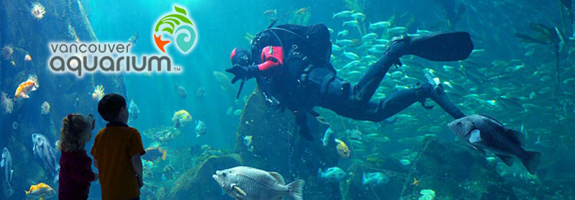 Fish aquarium vancouver - Vancouver Aquarium